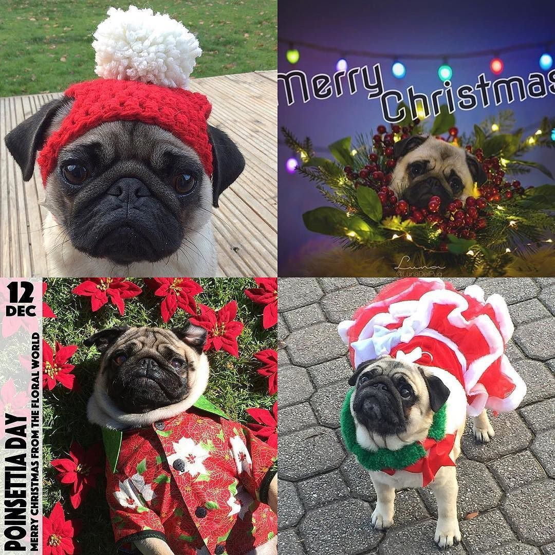Last Week Saw So Many Adorable Pugs Showing Off Their Favourite