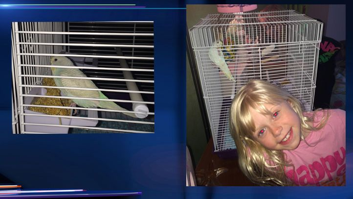 Petsmart Removes Parakeets From Stores Because Of Psittacosis Parakeet Petsmart How To Remove