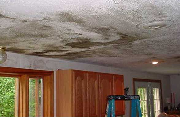 Do You Have Dangerous Mold In Your Attic On Top Home Improvements Inc