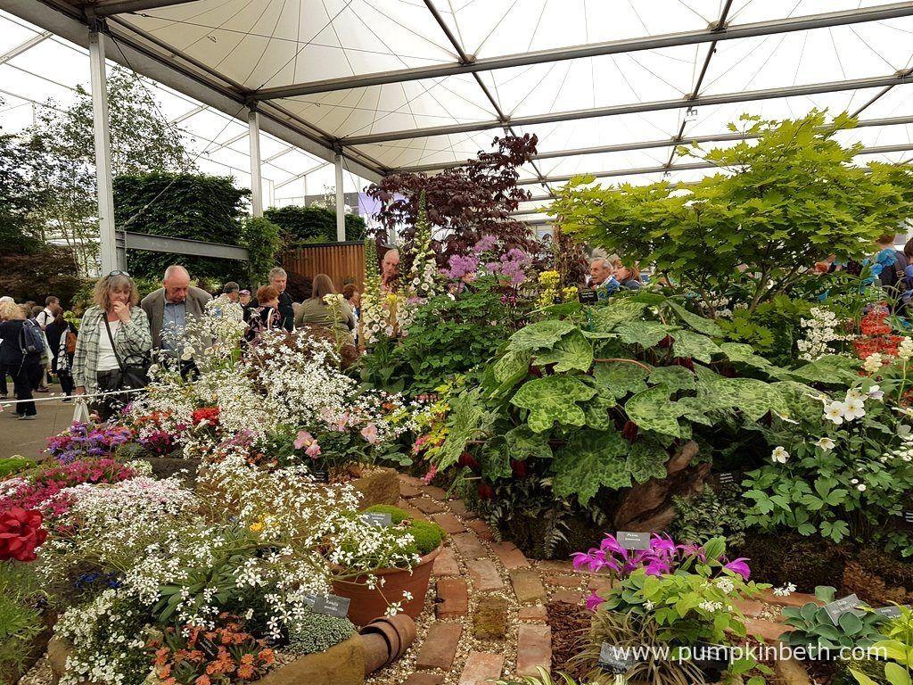 Harperley Hall Farm Nurseries Exhibit Inside The Great Pavilion At Rhs Chelsea Flower Show