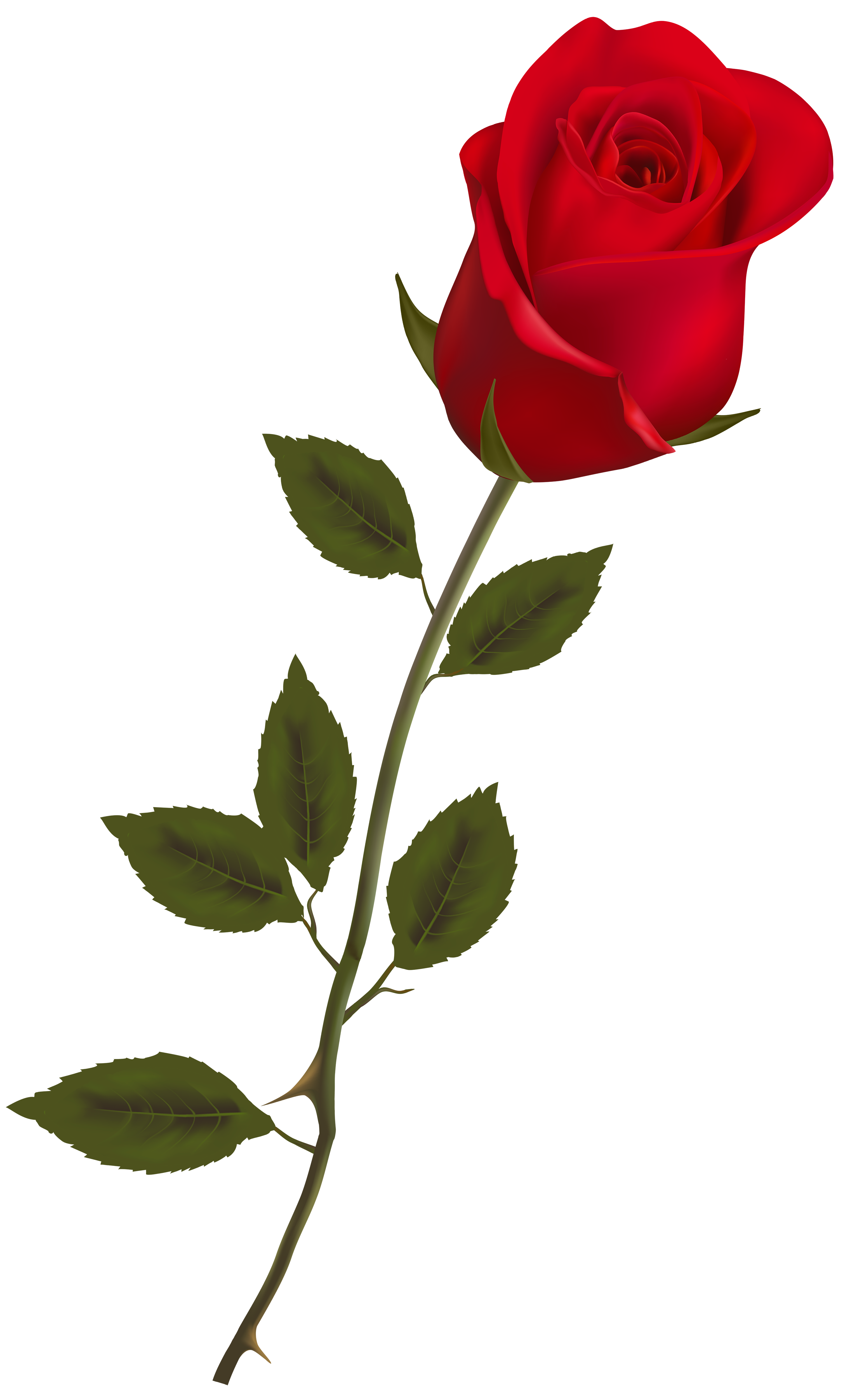 beautiful stem red rose png clipart wallpaper pinterest rose rh pinterest com clip art rose stem