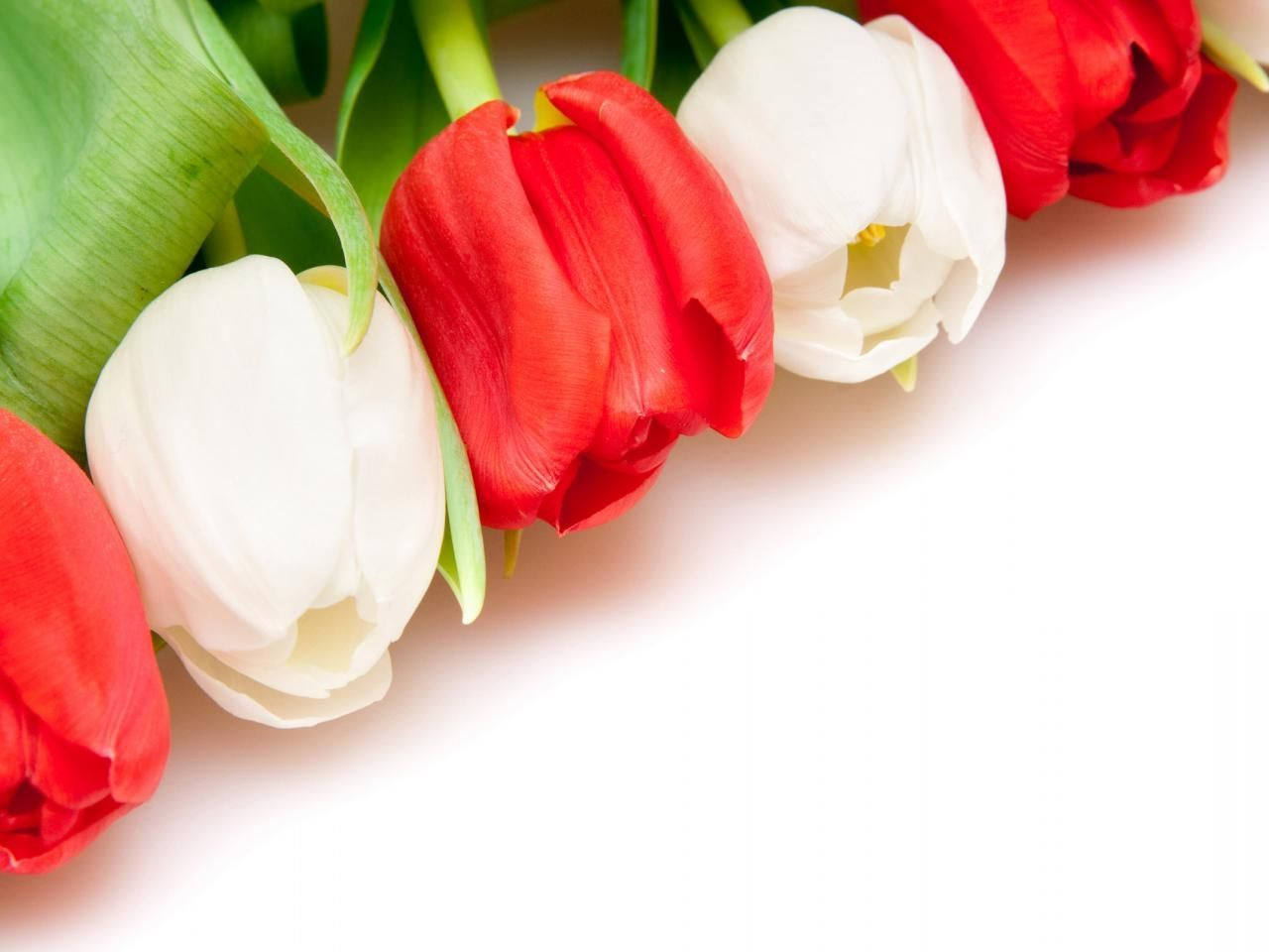 Flower wallpapers with white background flowers pinterest red and white tulip growing tulips wallpapers and images dhlflorist Image collections