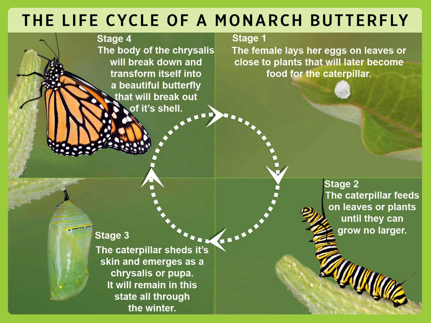 Pin By Elly Mcgregor Hodgkiss On Chrysalis