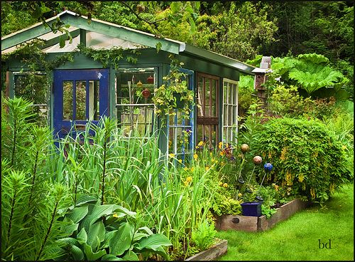 Sheila's Greenhouse   Flickr - Photo Sharing!