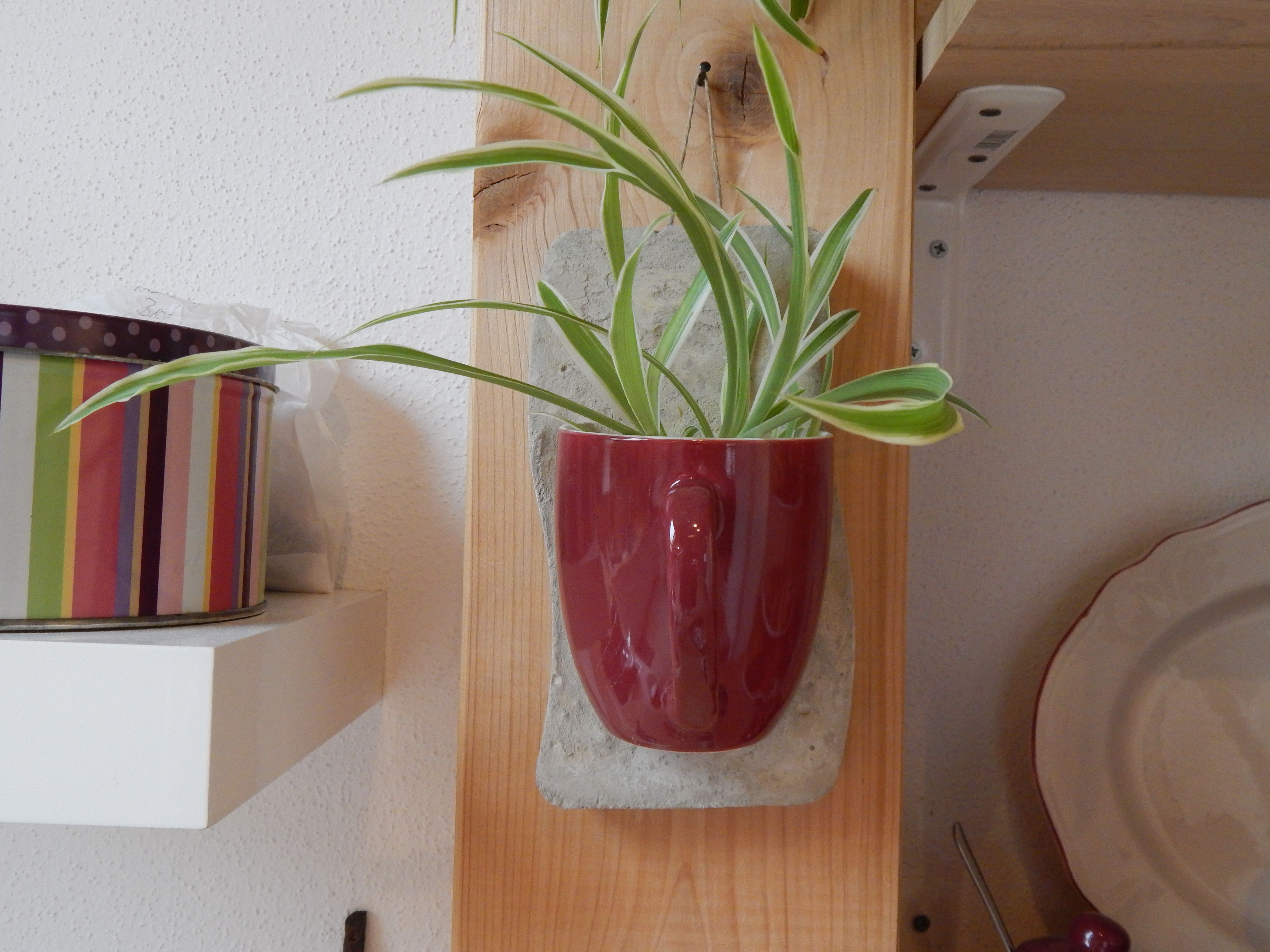 Kaputte Tasse Gerettet Ideen Rund Ums Haus Tassen