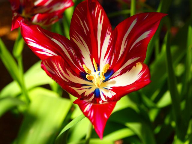 Rare Exotic Tropical Flowers Flower Cambridge Uk