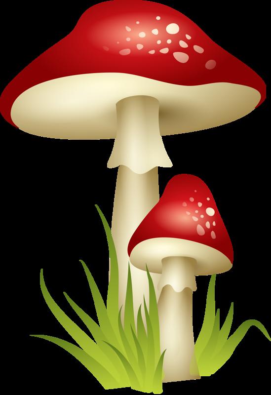Надписью, красивые картинки грибов для детей