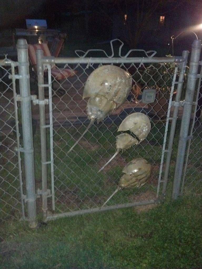 fence gartenlove