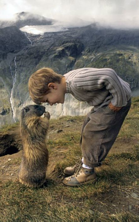 ~~Nose to nose: A marmot greets eight-year-old Matteo on the slopes of the Austrian Alps | The marmots and me: The schoolboy who has struck up a remarkable friendship with a colony of alpine animals | Daily Mail~~