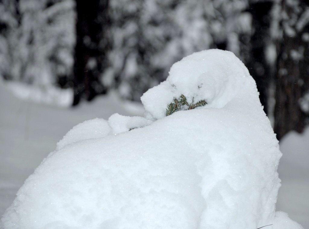Eleonorik — «зима (385).jpg» на Яндекс.Фотках