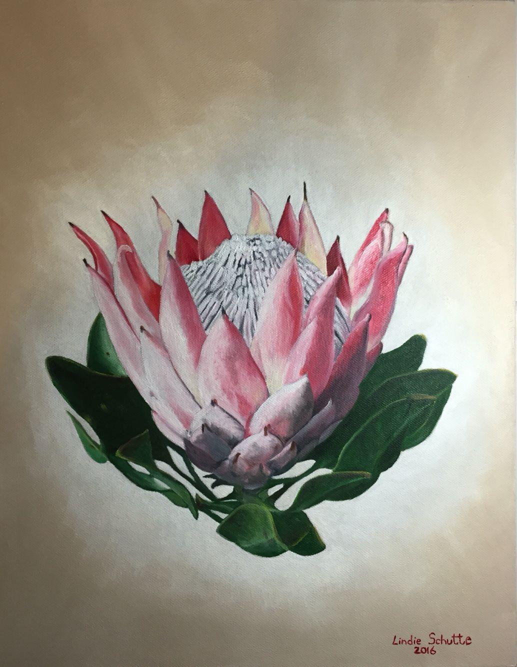 Protea Cynaroides King Protea 2 Oil On Canvas Protea Art Flower Art Floral Art