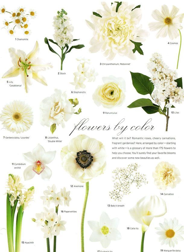 A Little Flower Education For Your Wednesday Evening Courtesy Of Martha Stewart Weddings Have A Vintage Wedding Flowers Wedding Flowers White Wedding Flowers