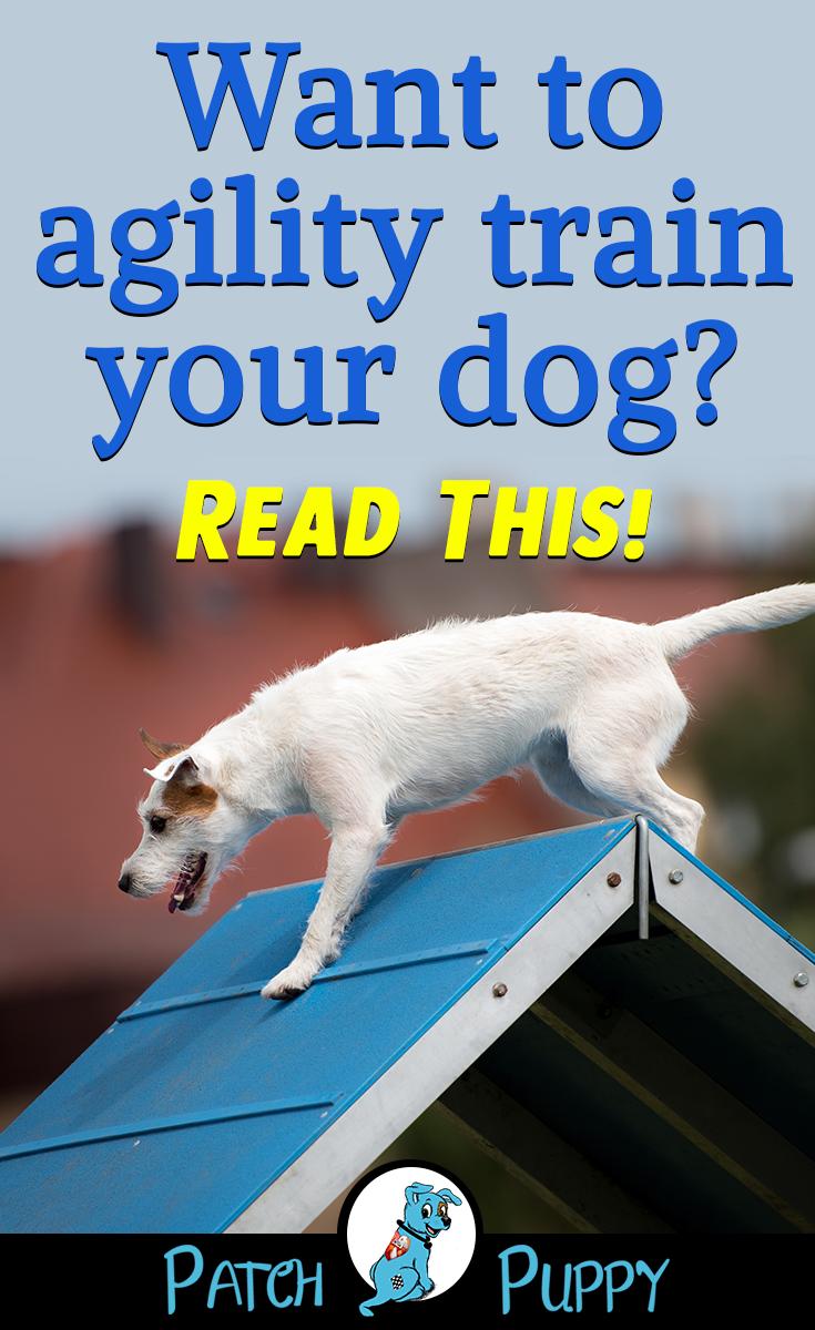 how can i train my dog to do agility