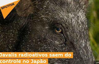 """""""O Grito do Bicho"""": Javalis radioativos saem do controle no Japão"""