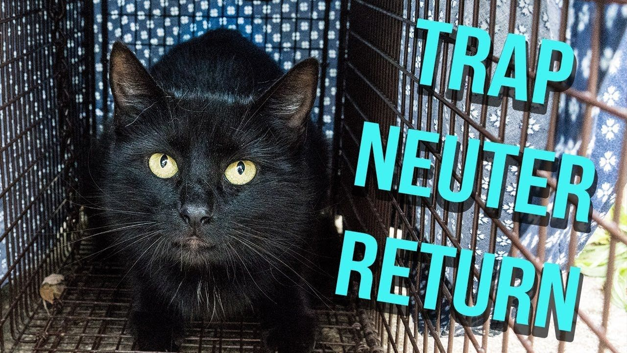 How to trap a feral cat for tnr youtube feral cats