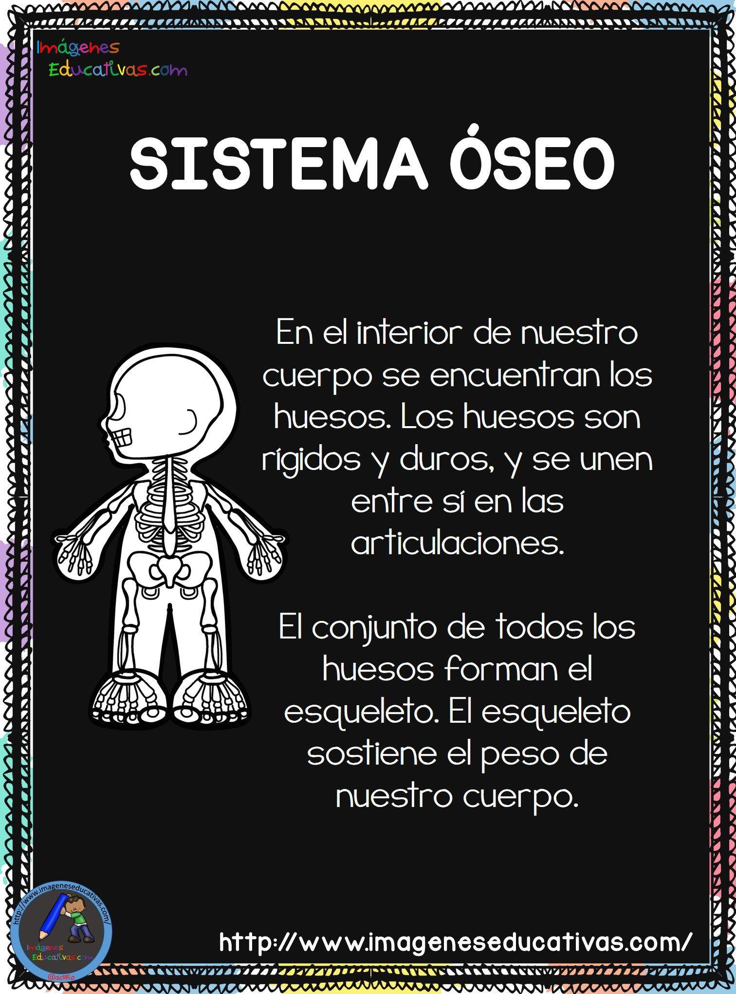 El-Cuerpo-Humano-2018-3.jpg (1512×2041)   Cuerpo humano para niños, Cuerpo  humano