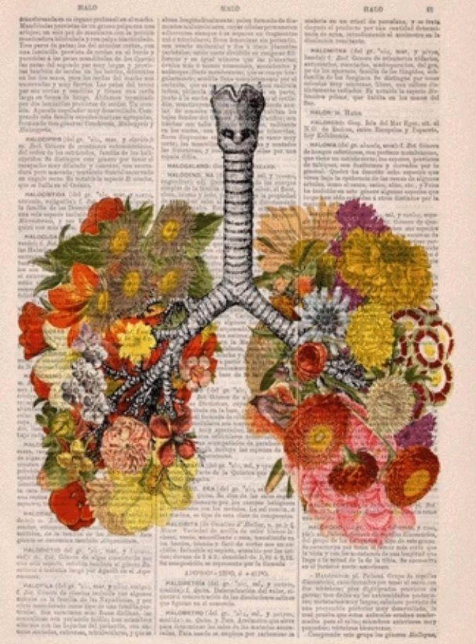 Pin von Zephyra auf Botanical | Pinterest