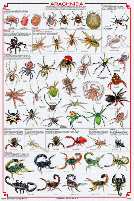 Spiders Poster, nothing I want to see..up close and ...