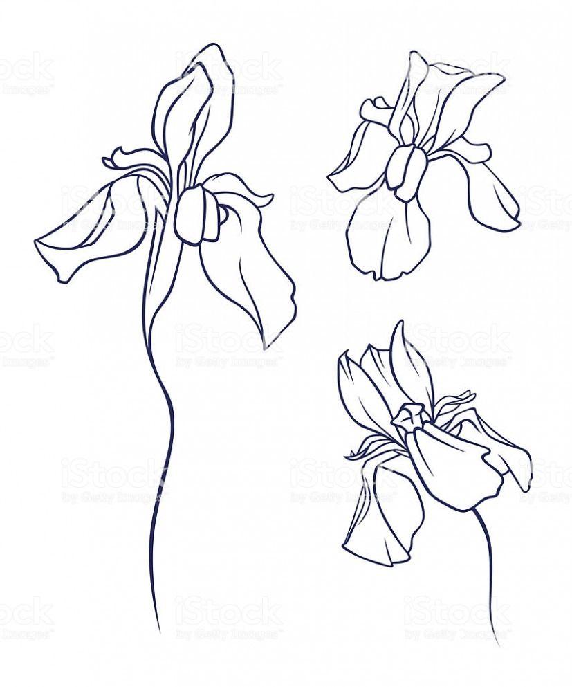The Real Reason Behind Cartoon Iris Flower Cartoon Iris Flower In 2020 Iris Flowers Cartoon Flowers Flower Wallpaper