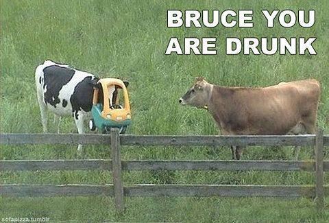 Bruce you are drunk