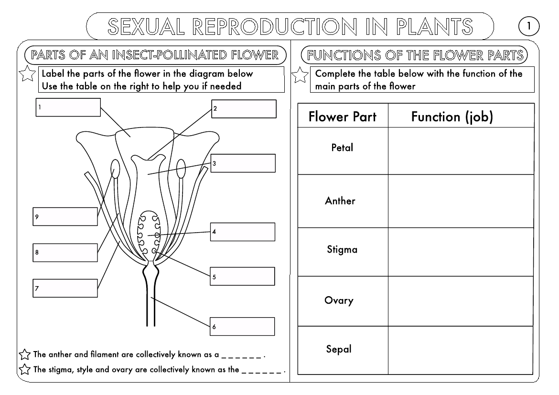 Huge Gcse Biology Worksheet Pack