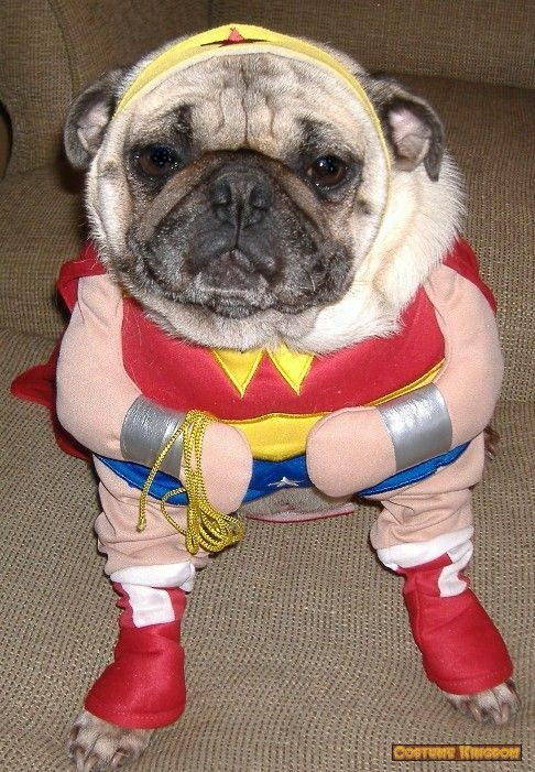 Wonder Woman Costume Funny Dog Pictures