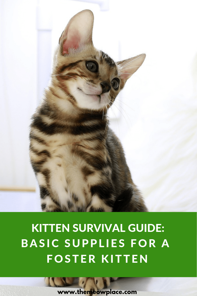 Kitten Survival Guide Basic Supplies For A Foster Kitten Foster Kittens The Fosters Cat Care