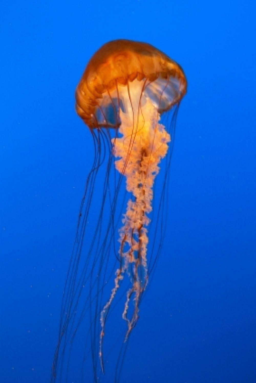 La ciudad de medusa aparece una medusa y acuasa de esto for Fish in jellyfish
