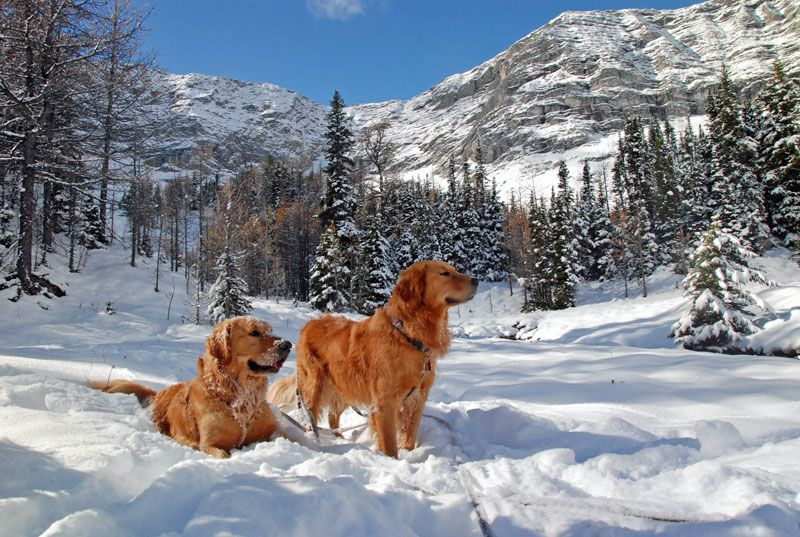 Pete And Ruby Exploring Up In The Highwood Pass Of Southwestern