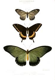 Image result for vintage insect illustrations