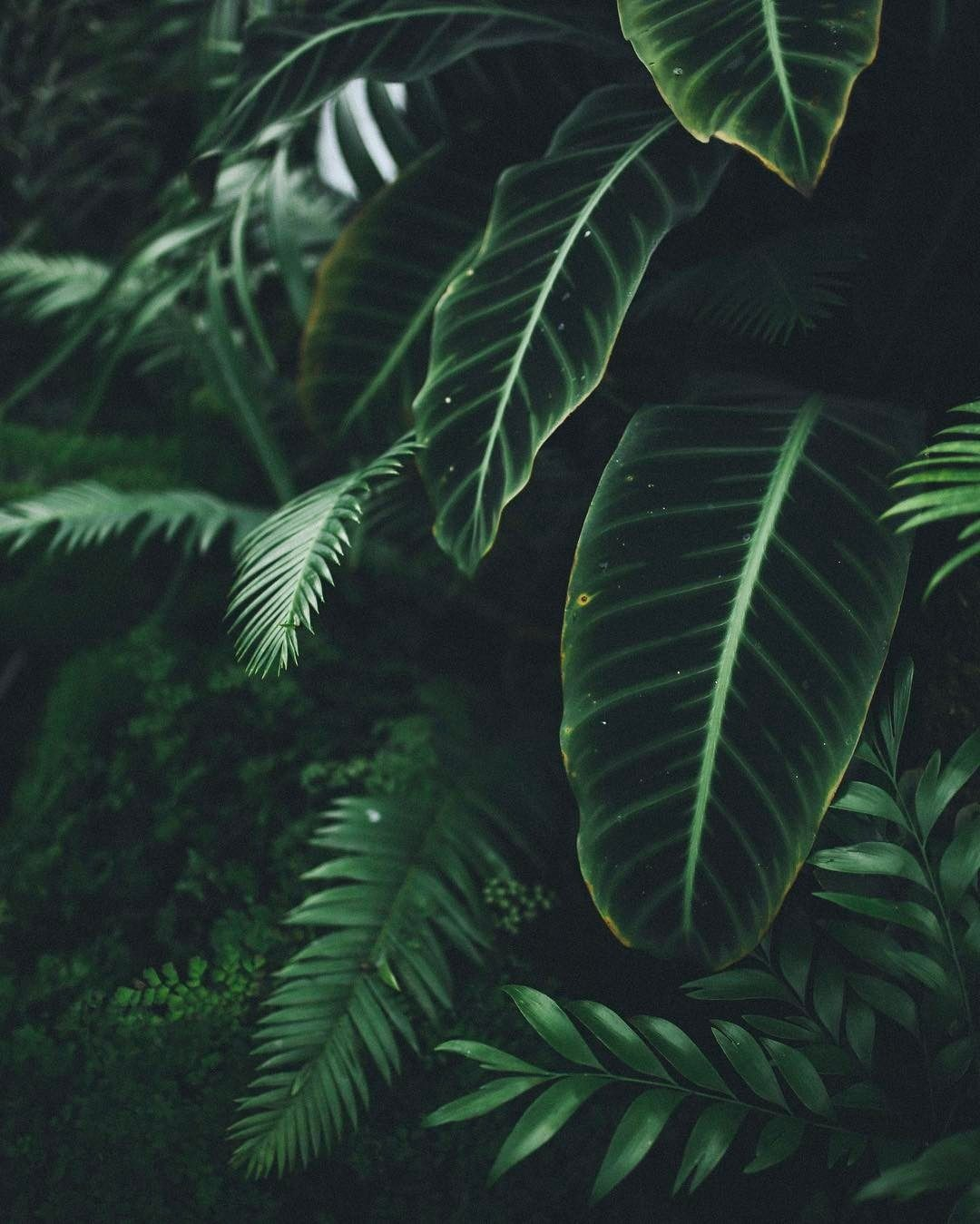 Aesthetic Dark Green Leaves Wallpaper