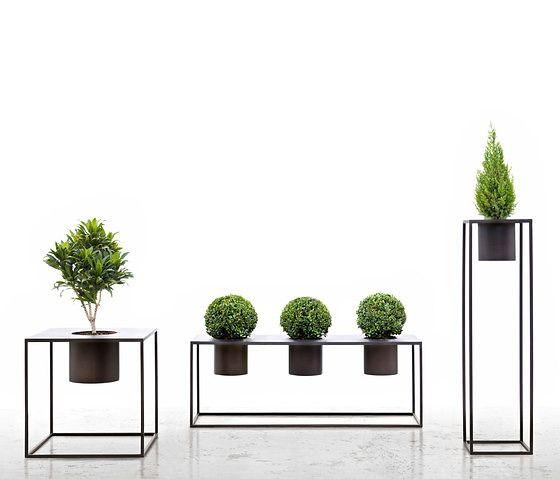 Ideas Para Decorar La Casa Con Flores Y Plantas Verde Te