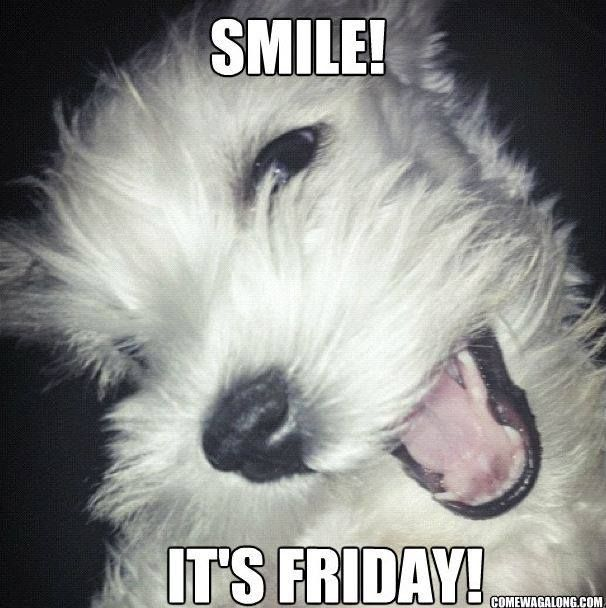 51ce8fa87e02c9f98aa8d9c70e44572b thank god it's friday dog edition friday memes! come wag along,Friday Dog Meme