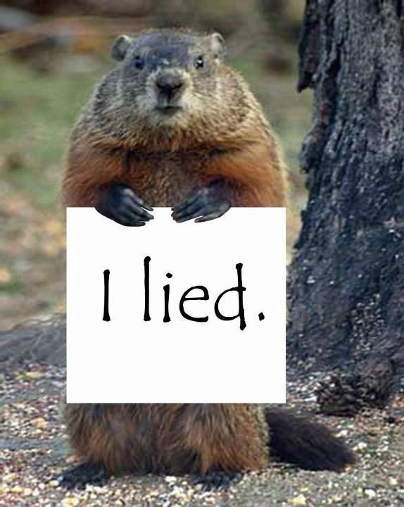 Funny Groundhog Stock Photos, Pictures & Royalty-Free