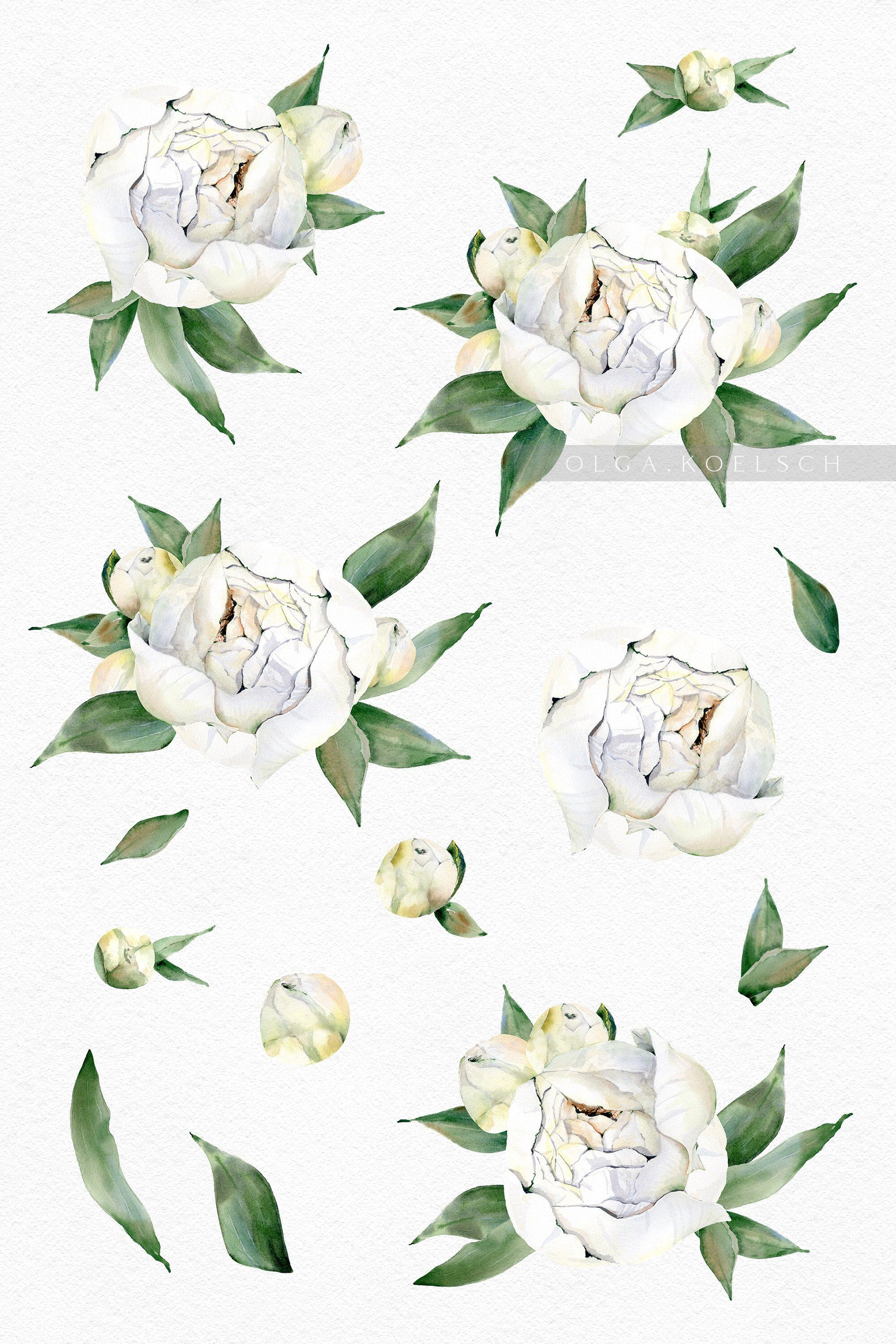 Watercolor White Flowers Clipart Peony Flower Wedding Etsy In 2021 Watercolor White Wedding Clipart Flowers Clipart