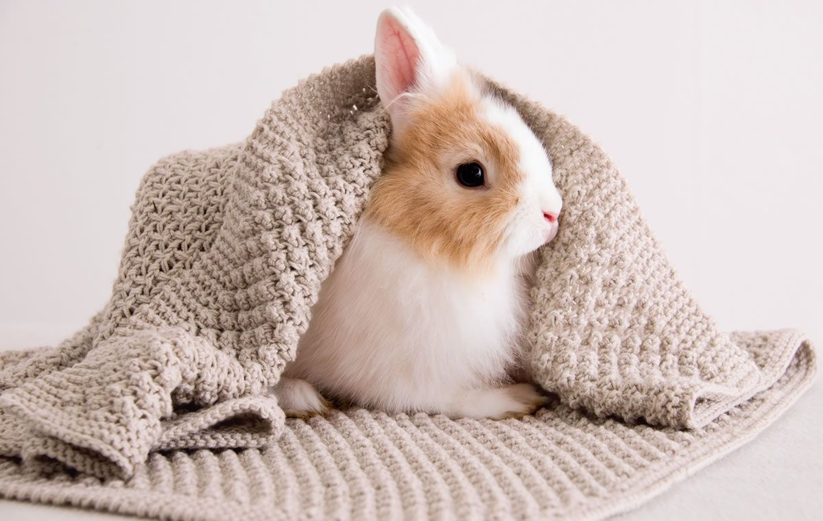 Decke Cool Wool Baby Filati Infanti No 9 Wool Und Baby