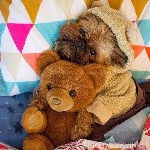 It S Ok To Match Your Besties Griffon Dog Cute Animals