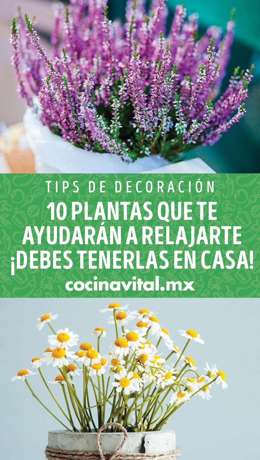 ¡Dale la bienvenida a estas plantas y, dile adiós al estrés y la ansiedad! Con solo tenerlas en casa o hacer un té de alguna de ellas, serán de gran ayuda.