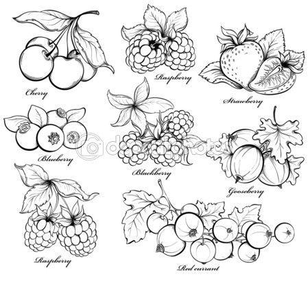 raspberry red currant - Cerca con Google