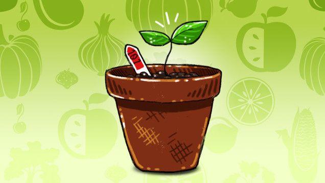The Easiest Vegetables To Grow For Beginner Gardeners 640 x 480