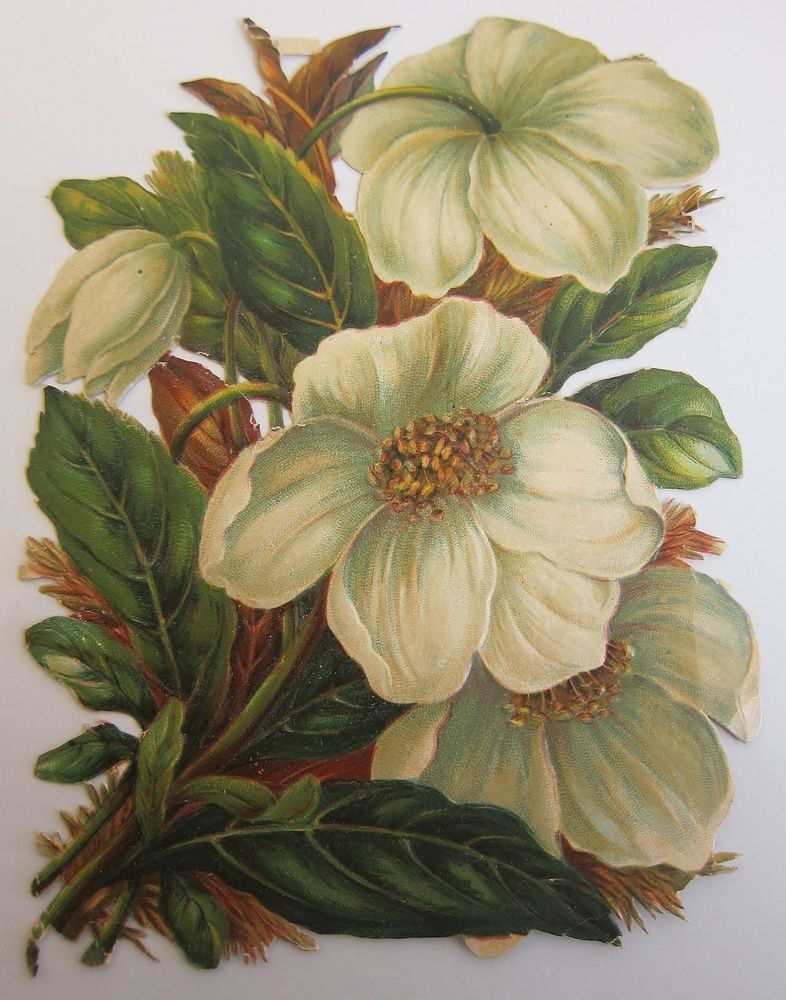 Antique Victorian Die Cut Embossed Scrap of a Bouquet of Dogwood ...