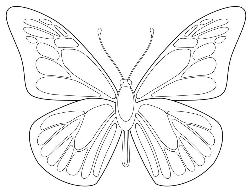 Immagine Correlata Butterfly Outline Butterfly Printable Butterfly Coloring Page