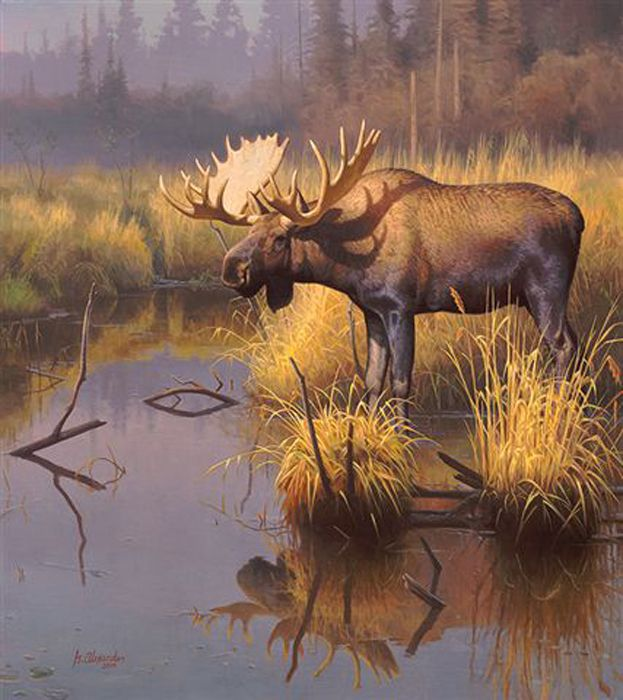 Арт-печать дикой природы плюс оригинальные картины с ...