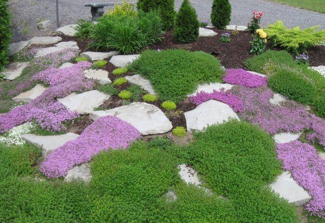 steingarten gartendeko thymian bodendecker lila steine idee, Garten ideen