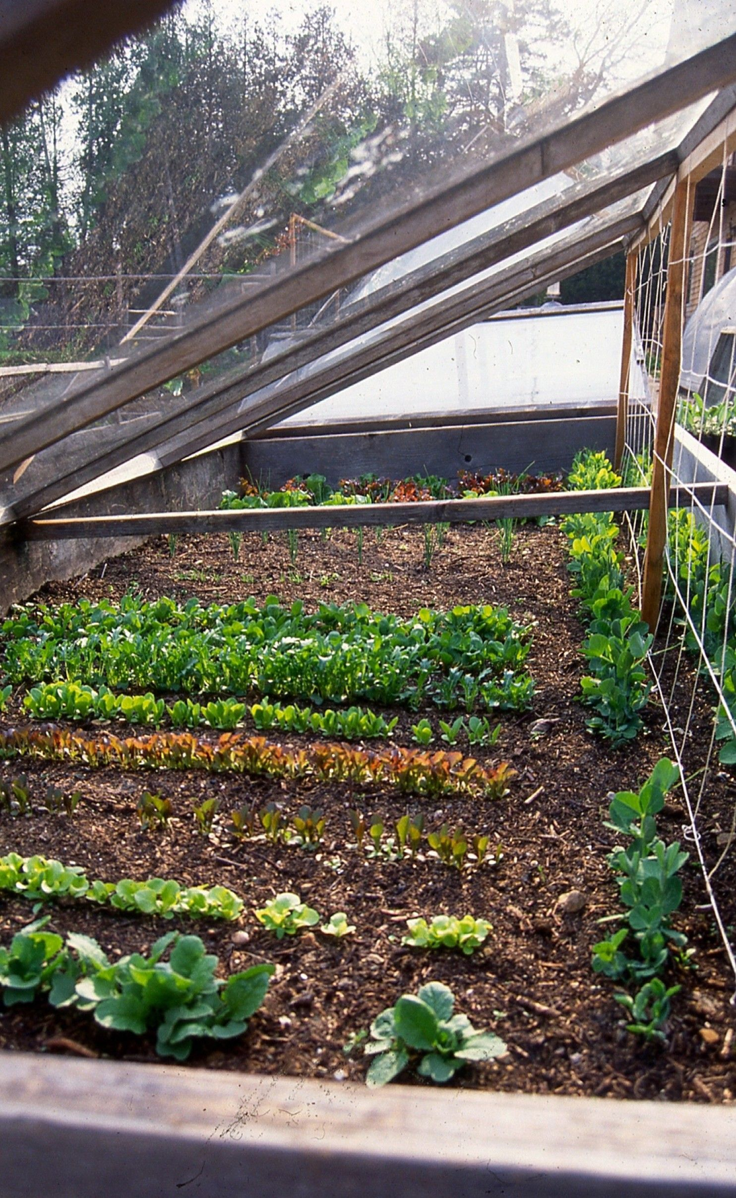 Slim pickings in this summer\'s garden? You can do better next year ...