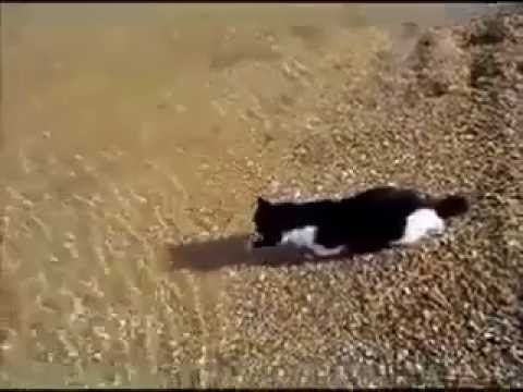 Cat Sees Owners In The Water, But What They See Happen Next… You Won't Believe Your Eyes! - Happy Pets Club