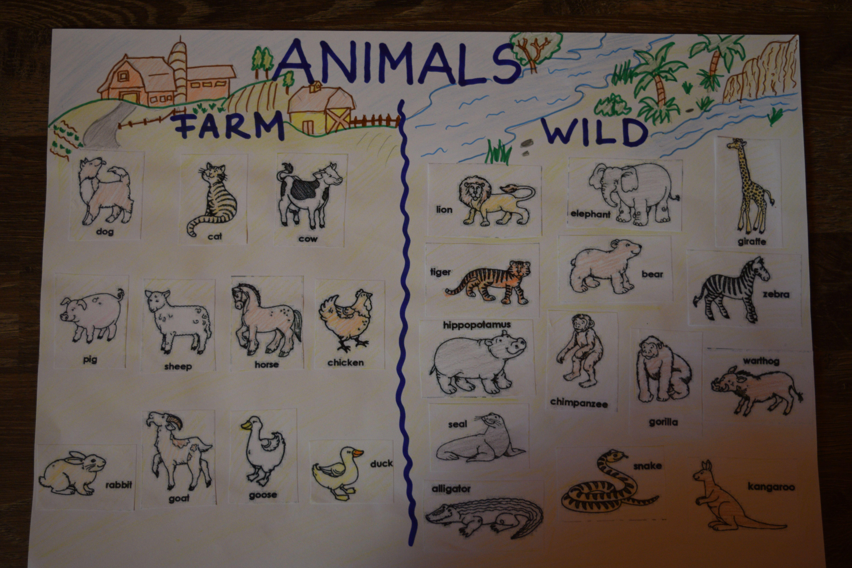Farm And Wild Animals Anchor Chart Animals Wild Zoo Animals Animals [ 4000 x 6000 Pixel ]