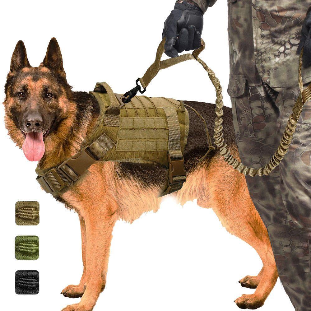 Hunter Collar de Perro P