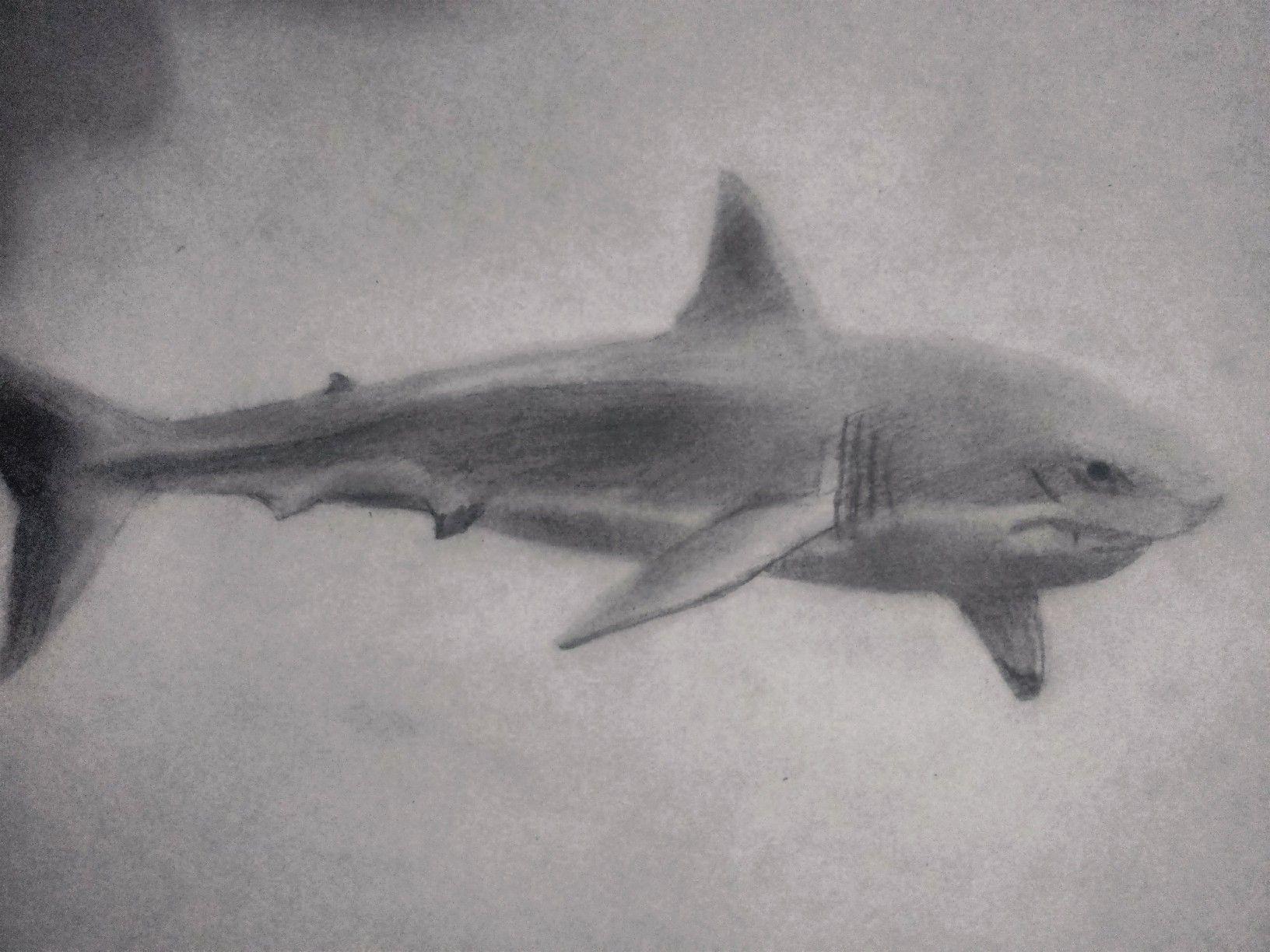Dibujos De Tiburones Realistas