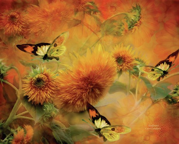 Sunflowers & Butterflies by Carol Cavalaris. Prints available at Fine Art America. Sunflowers You are too big to ignore Perhaps that is why You are adored.  Sunflowers prose by Carol Cavalaris  This mixed media painting of giant golden sunflowers with three butterflies dancing around the flowers is from the Language Of Flowers collection by Carol Cavalaris.